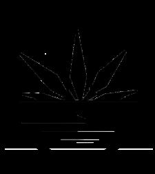 gabriola cannabis